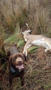 Hokie comes through on a December 2 deer hunt.